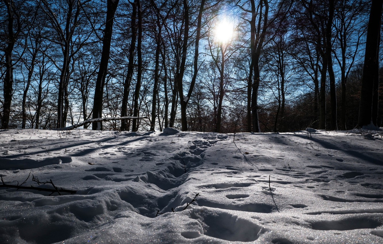 Photo wallpaper winter, snow, trees, landscape, traces, nature, beauty