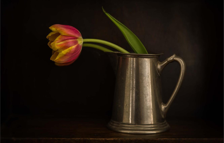 Photo wallpaper red, Tulip, mug