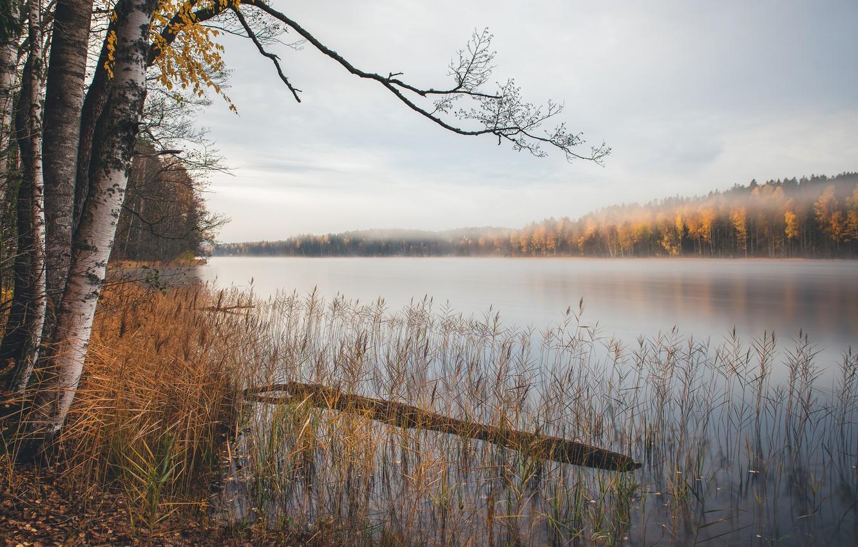 Photo wallpaper autumn, lake, birch