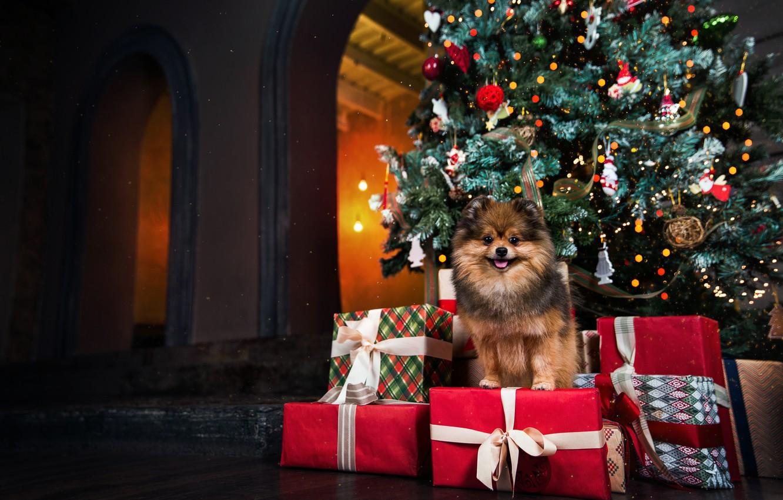 Photo wallpaper tree, dog, Christmas, gifts, New year