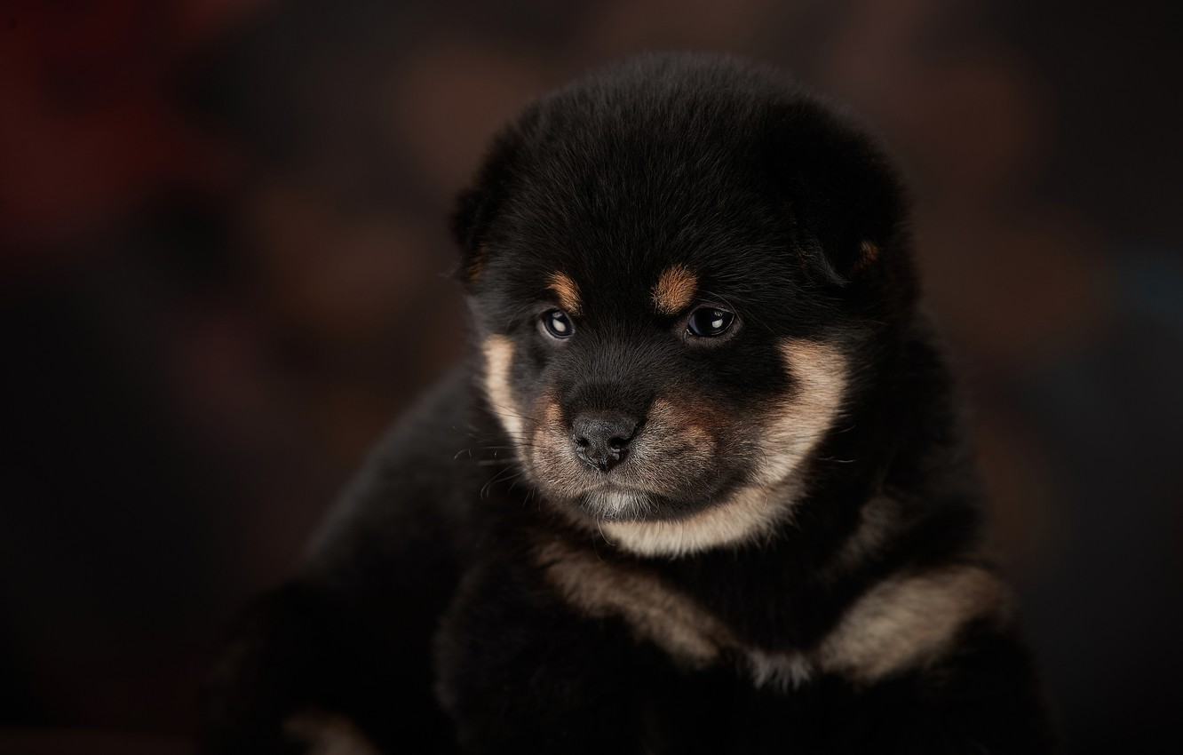 Photo wallpaper background, puppy, face, doggie, Lana Polyakova