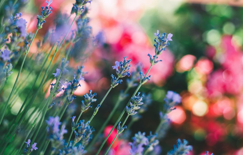 Photo wallpaper wallpaper, field, flowers, blur, stems