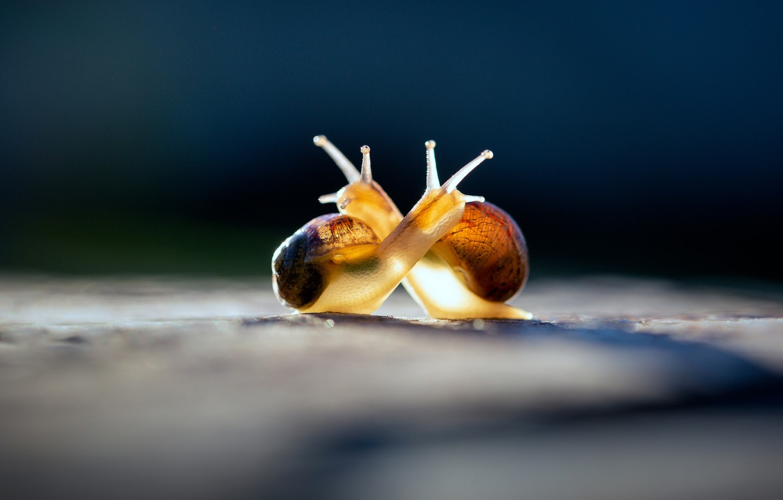 Photo wallpaper macro, light, love, blue, yellow, pose, the dark background, romance, two, cute, snail, snails, friendship, …