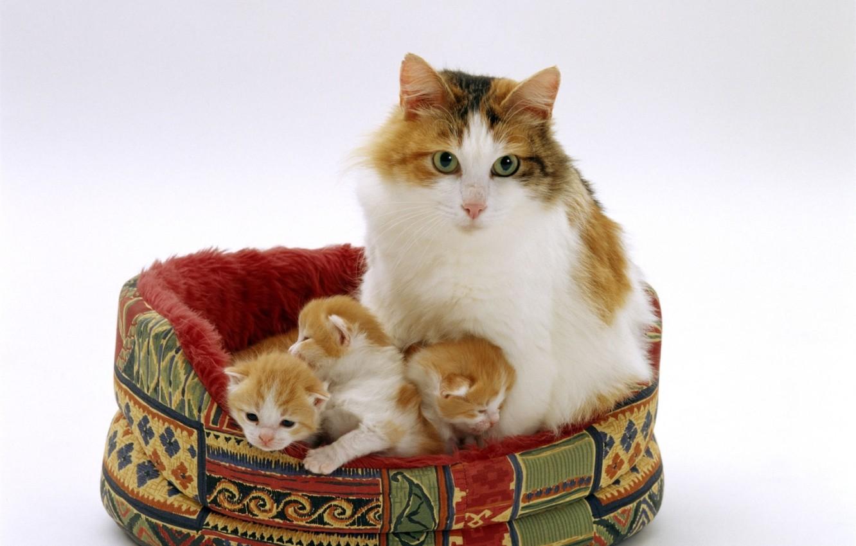Photo wallpaper kittens, mom, bench