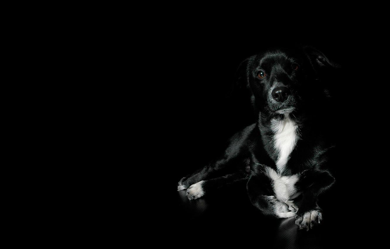 Photo wallpaper black, dog, beautiful