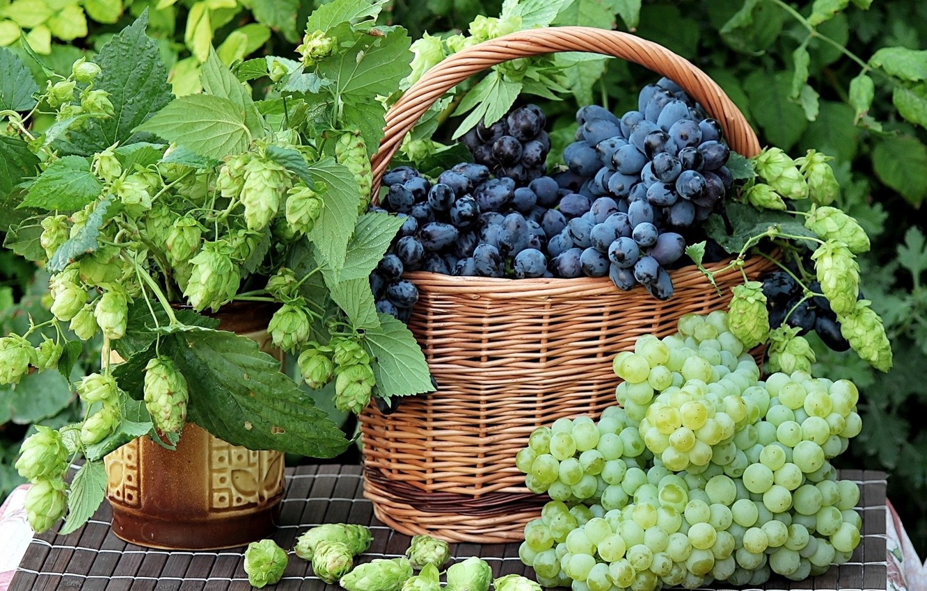 Wallpaper Grapes Still Life Hops Images For Desktop Section еда
