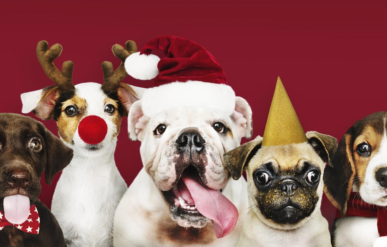 Photo wallpaper dog, New Year, Christmas, puppy, happy, Santa, Christmas, puppy, dog, New Year, cute, Merry, santa …