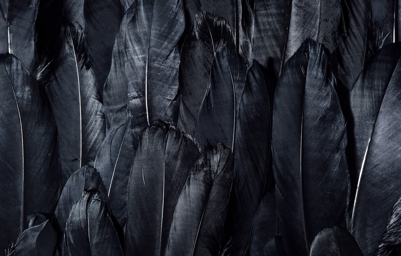 Wallpaper Dark Black Feathers Textures Black Wallpaper