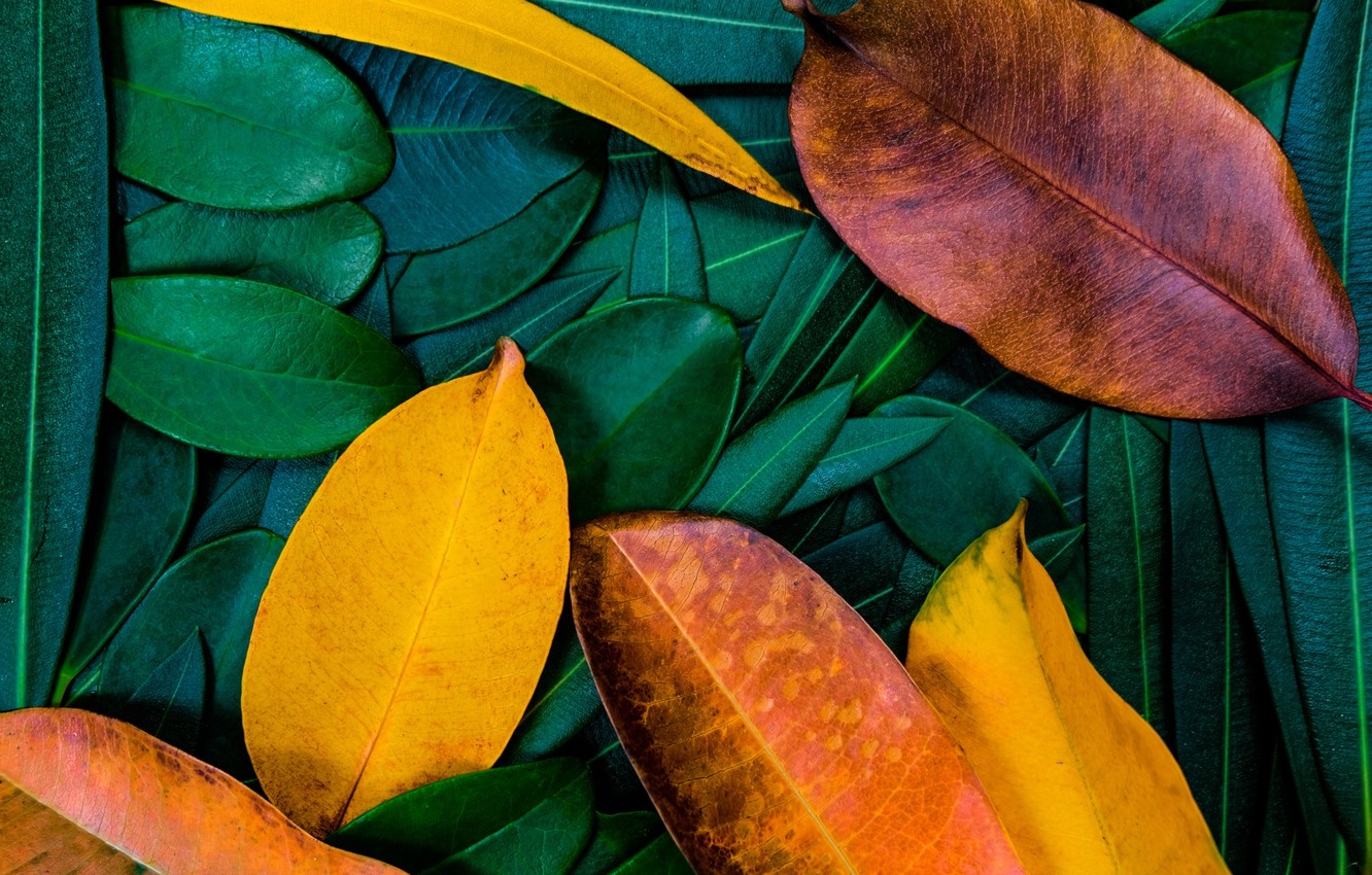 Photo wallpaper autumn, leaves, background, colorful, texture, background, autumn, leaves