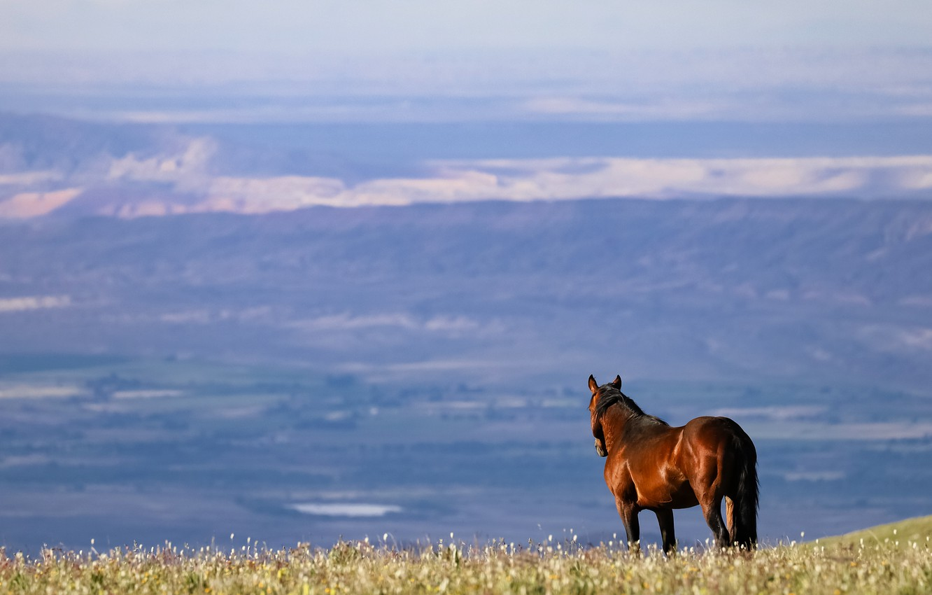 Photo wallpaper field, mountains, horse, horse, back, space, look into the distance