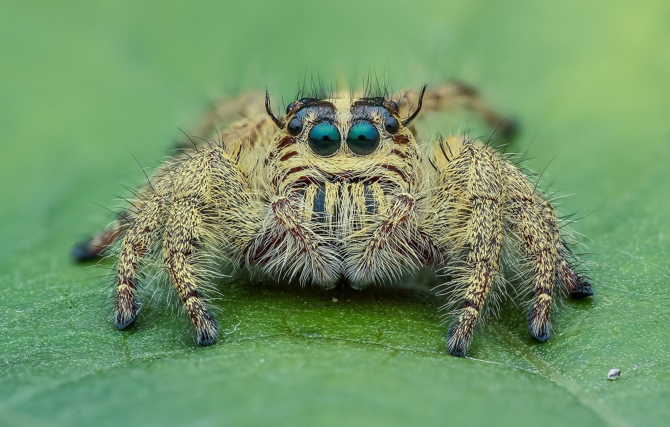 Photo wallpaper look, macro, background, spider, insect