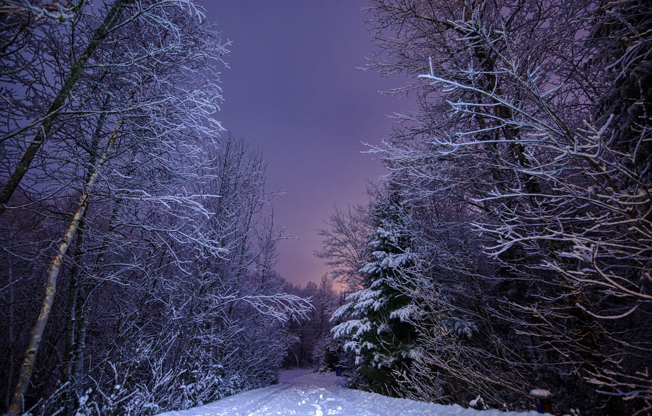 Photo wallpaper winter, road, forest, snow, landscape, nature, the evening