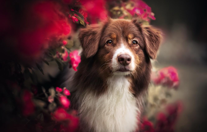 Photo wallpaper nature, each, dog