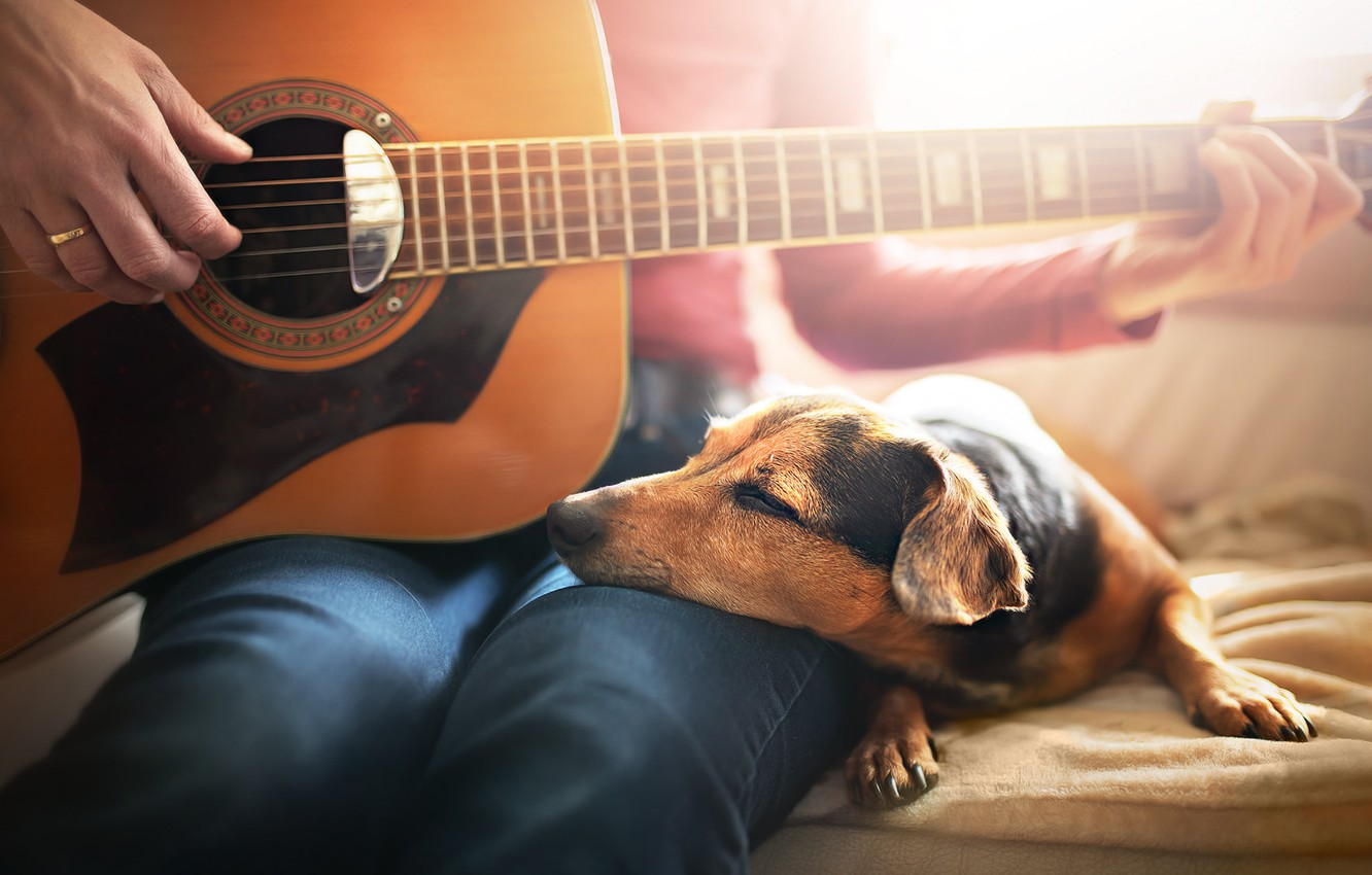 Photo wallpaper comfort, house, each, people, guitar, dog