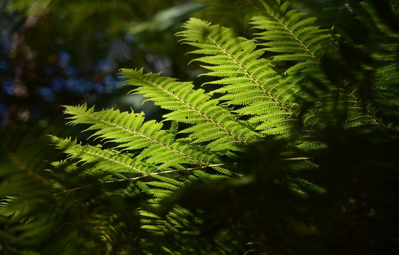 Photo wallpaper macro, nature, sheet, fern
