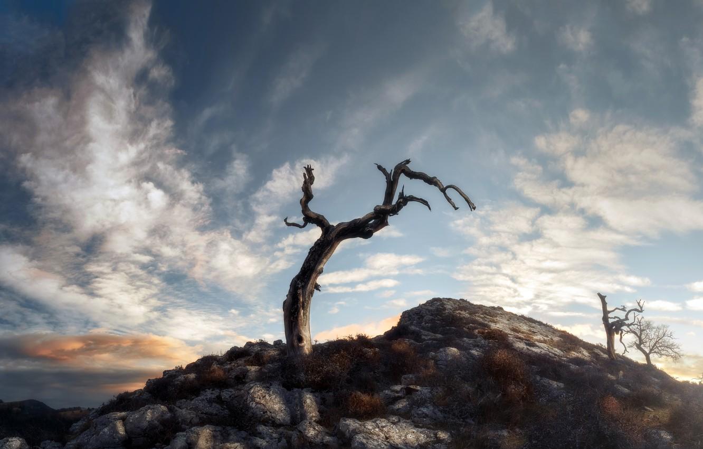 Photo wallpaper the sky, tree, mountain