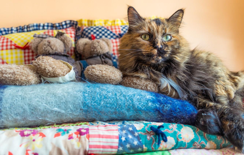 Photo wallpaper cat, look, pose, comfort, heat, background, room, wall, toys, pillow, blanket, bears, bed, lies, blanket, …