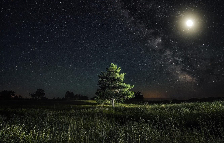 Photo wallpaper stars, light, night, the moon, pine