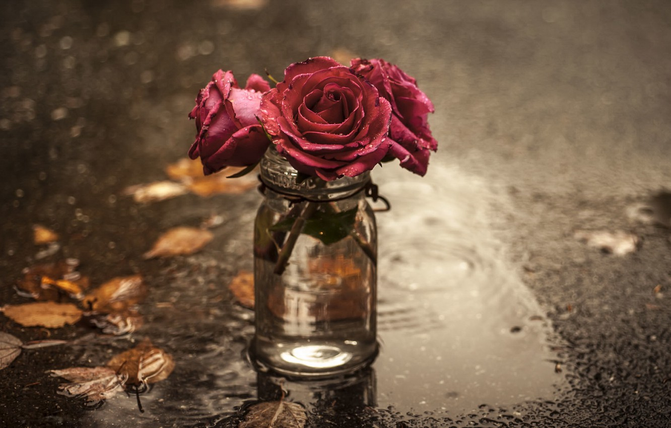 Photo wallpaper flowers, roses, puddle