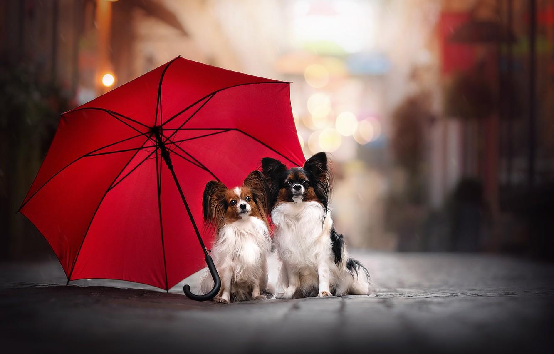 Photo wallpaper umbrella, a couple, two dogs, Papillon