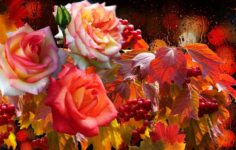 Photo wallpaper drops, rain, lights, Roses, Kalina