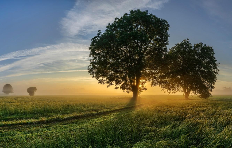 Photo wallpaper road, field, tree, morning