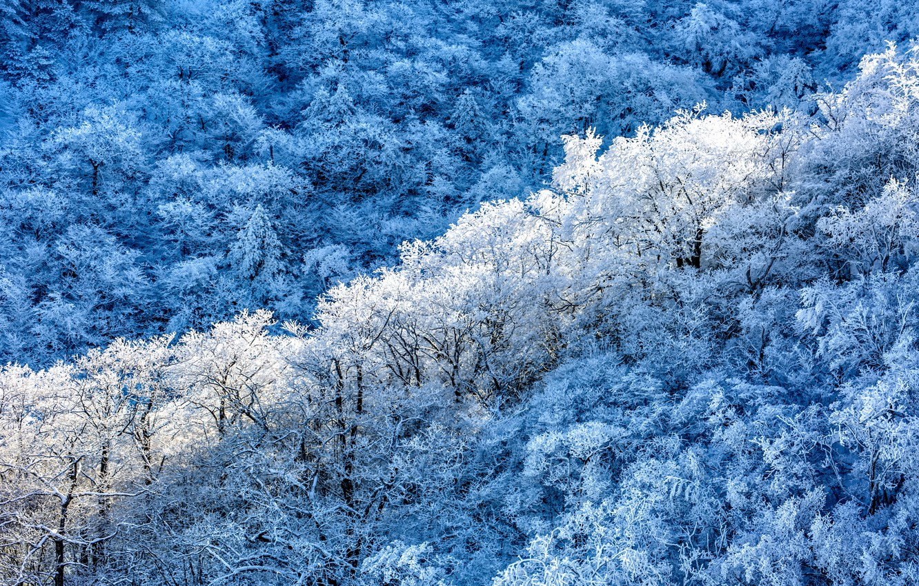 Photo wallpaper winter, forest, snow, trees, nature, frost, the view from the top