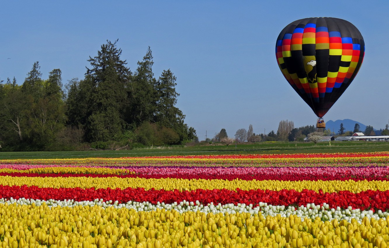 Photo wallpaper field, ball, tulips