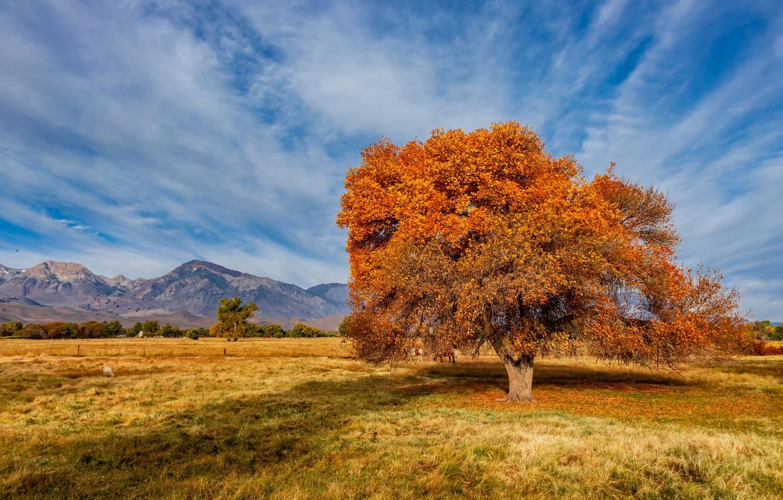 Photo wallpaper autumn, United States, California, Sierra Trailer Park