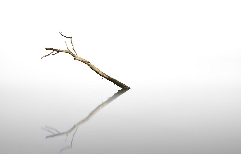 Photo wallpaper reflection, background, tree