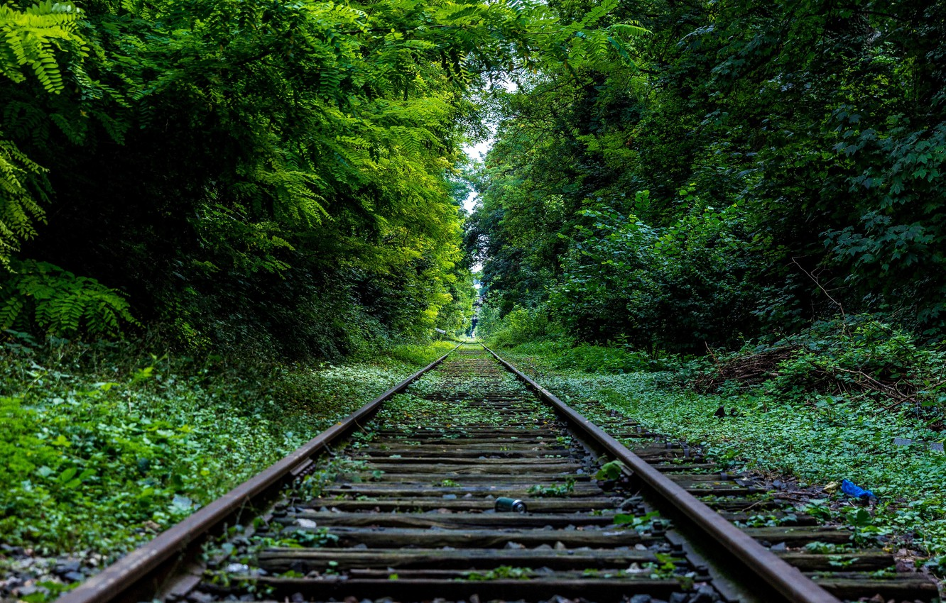 Photo wallpaper ROAD, FOREST, GREENS, TREES, RAILS, SLEEPERS