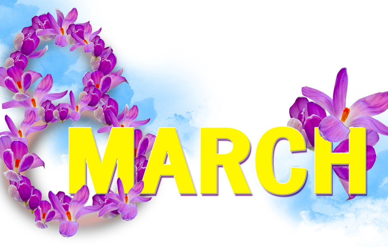 Photo wallpaper crocuses, white background, March 8, women's day
