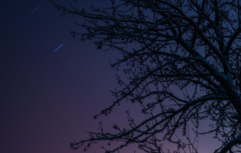 Photo wallpaper the sky, stars, night, apple, sky, night, stars, tree