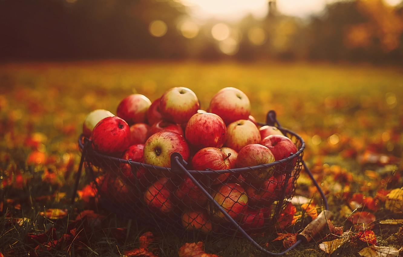 Photo wallpaper autumn, grass, leaves, basket, apples, food