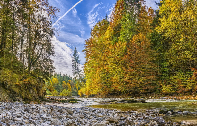 Photo wallpaper forest, river, stream