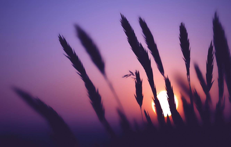 Photo wallpaper Sunset, The sun, Dawn, Landscape