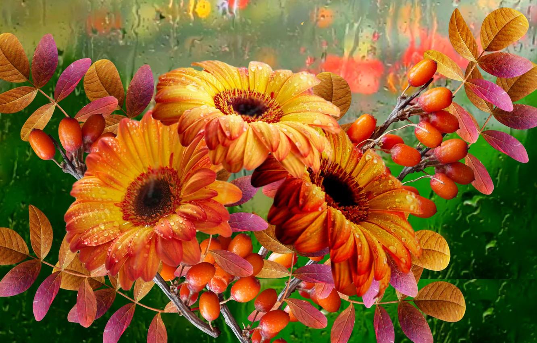 Photo wallpaper autumn, flowers, rain, Bouquet