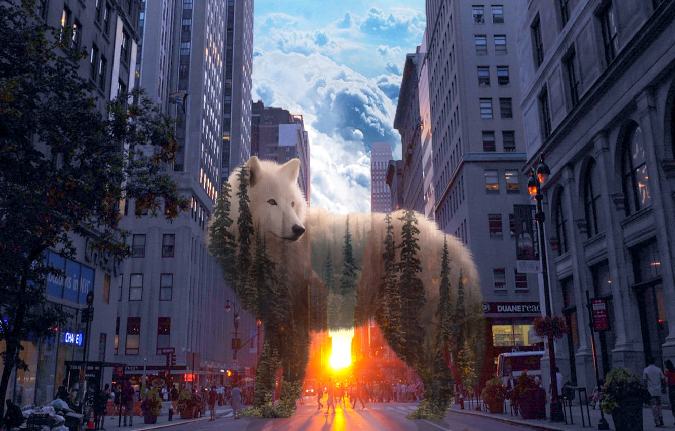 Photo wallpaper forest, the city, wolf, spirit