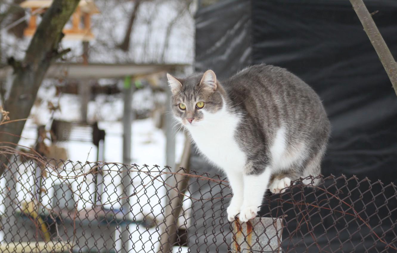Photo wallpaper winter, cat, cat