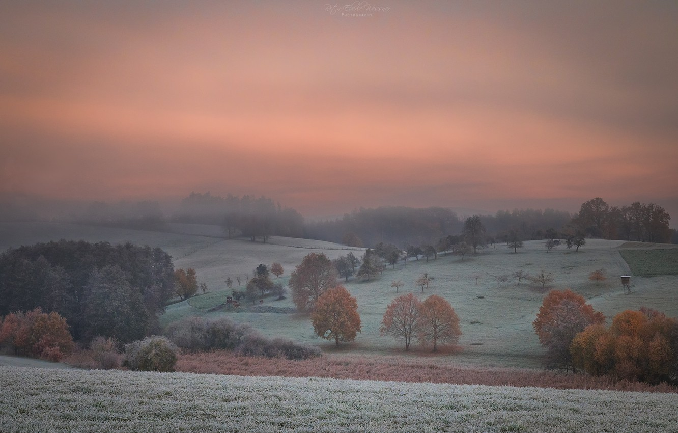 Photo wallpaper the sky, trees, fog, dawn, field, morning, forest, frost