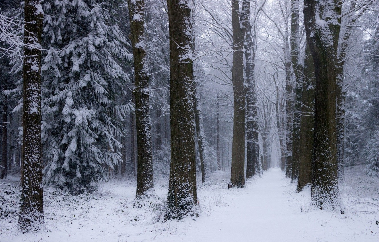 Photo wallpaper winter, forest, snow, trees, nature, Netherlands