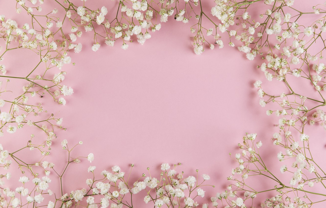 Wallpaper Flowers White White Pink Background Pink Flowers