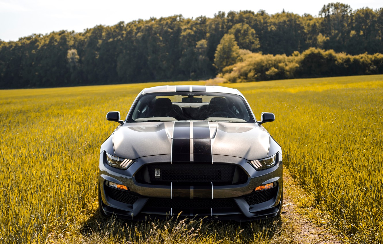 Photo wallpaper Mustang, Ford, Shelby, Ford, Mustang, GT350, Ford Mustang Shelby GT350