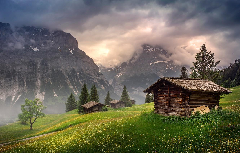 Photo wallpaper field, forest, summer, the sky, grass, clouds, light, flowers, mountains, nature, fog, tree, rocks, hills, …