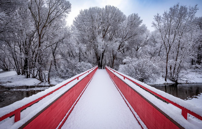 Photo wallpaper winter, bridge, Park