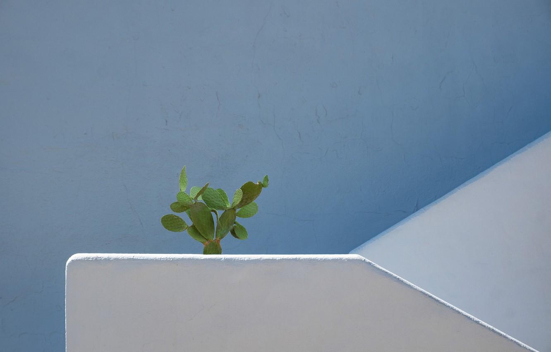 Photo wallpaper wall, cactus, wall, cactus