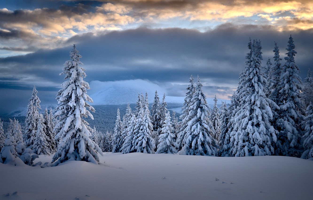 Wallpaper winter, clouds, snow, trees, landscape, nature, taiga ...