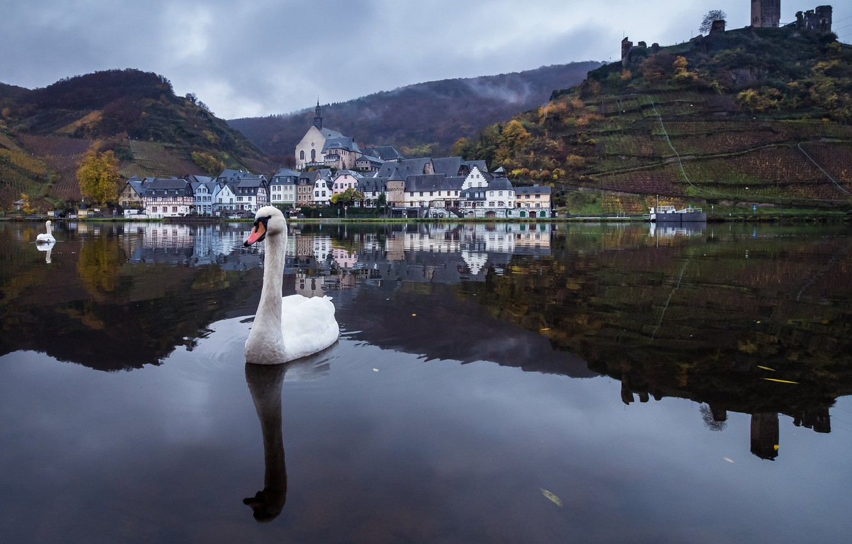 Photo wallpaper Swan, Rhineland-Palatinate, Ellenz, The District Of Cochem-Zell