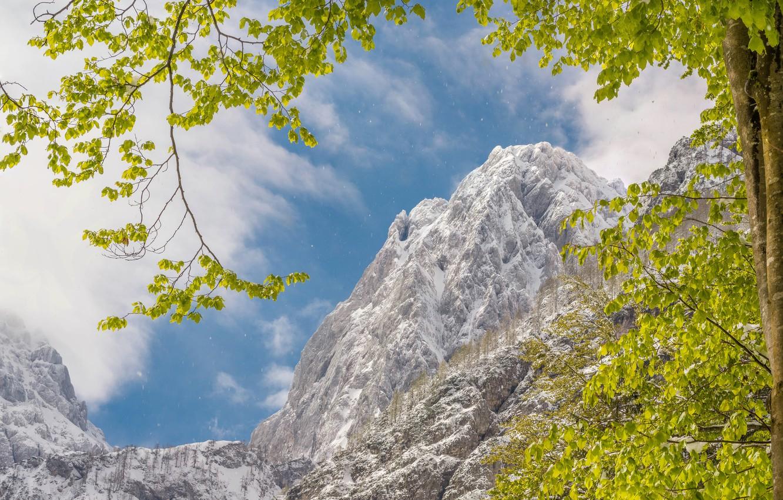 Photo wallpaper winter, snow, mountains, branches, nature, tree, rocks, foliage, Spring