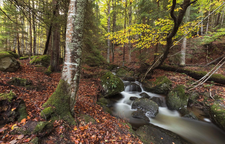 Photo wallpaper autumn, forest, nature, stream, stones